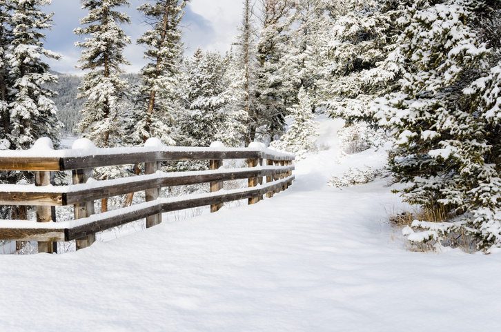 Snowy Forest Path Lined with a Fence