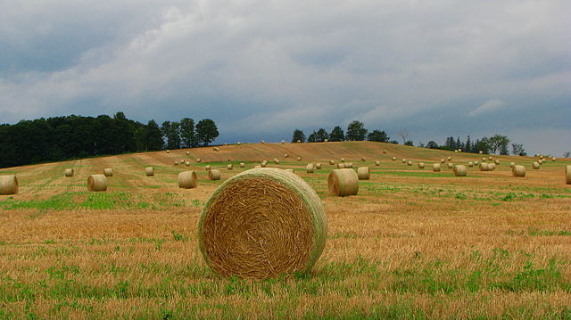 A Photo of Straw bales near Alliston, Ontario