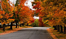 A Photo of a Street, Maple Ontario
