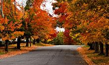 A Photo of a Street, Maple Ontario